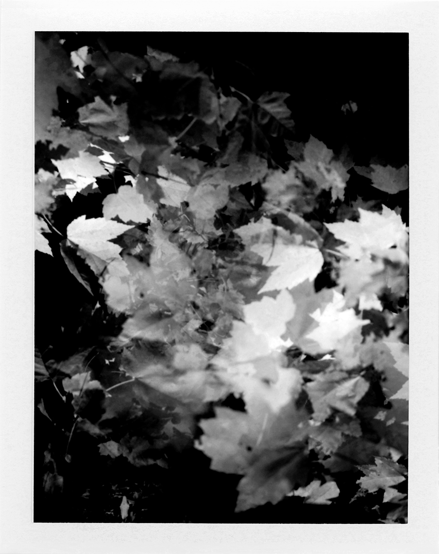 eric_martin_photography_kalidescopic-fall_022-bw