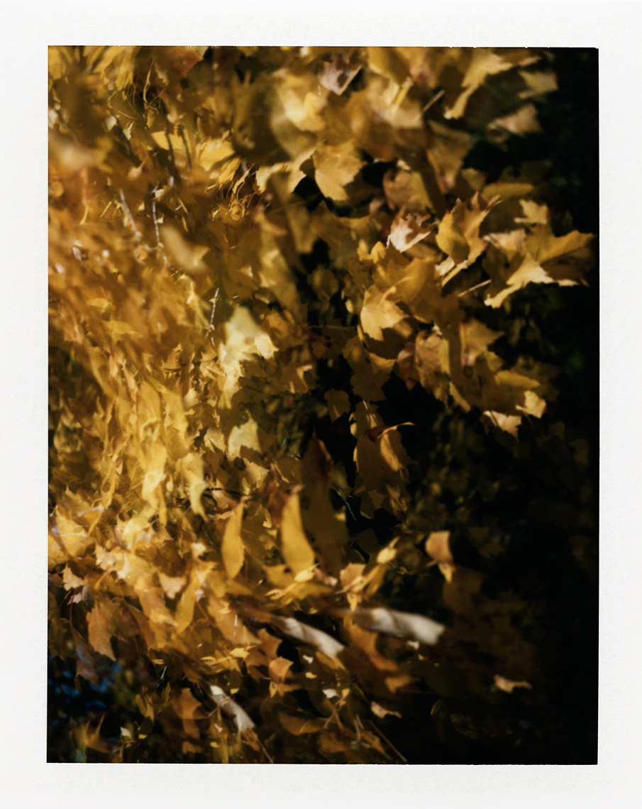 eric_martin_photography_kalidescopic-fall_035